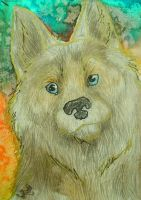 ACEO:dog by Bledhgarm