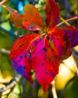 Autumn Leaf by Delia-Stock