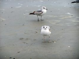 Seagull Stock 1 by Tay-san