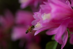 search for nectar by marcobusoni