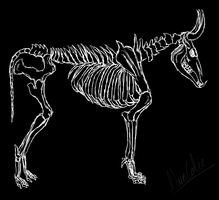 Bullwolf skeleton by Narncolie