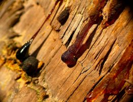 Tree resin by TheFunnySpider