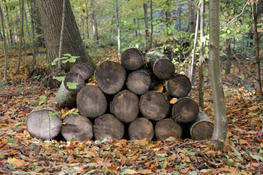 Stack of wood - Stock by EloieeStock