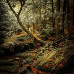 Forest Of Equilibrium by ulivonboedefeld