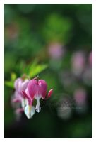 Bleeding Heart by jenniferstuber