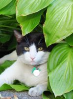 Just Another Day Under the Hosta Leaves by Kitteh-Pawz