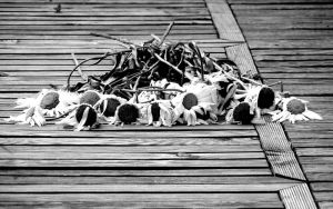 Dead flowers by nyc0