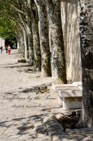 Graffitrees by the Seine by sheiabah