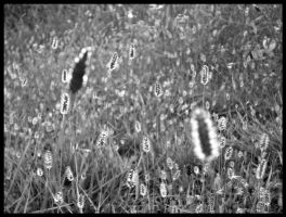 b n w burning field by D-u-D