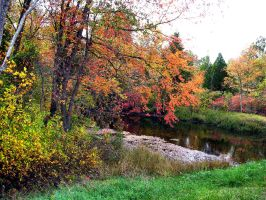 Fall Pictures by FairieGoodMother