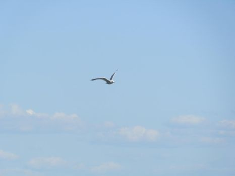 Seagull and Clouds [STOCK] by AzrielMordecai