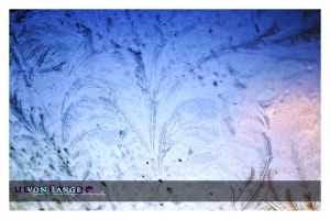 Iced Feathers II. by MRvLPhotography