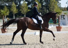 National Dressage and Jumping_52 by CalyHoney