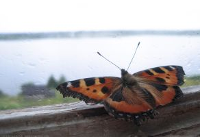 Summer09_Butterfly by S-L-A-V-A