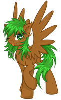 Willow Bark by N0M1