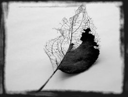 ...... at the end of life by eReSaW