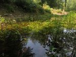 small shallow pond by MRJelveh