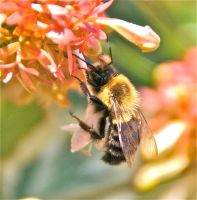 bee up close (too) by coastalwaters