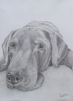 dog in graphite by Horsenart95