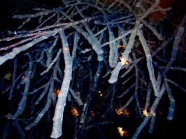 Mystical Ice Branches by WiseTatyana