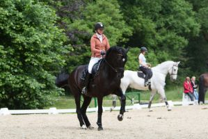 Black Warmblood  Training Great Collection Piaffe by LuDa-Stock