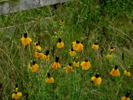 Yellow Pasture Flowers by Chris01125