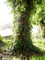 magic ivy tree by Treeclimber-Stock