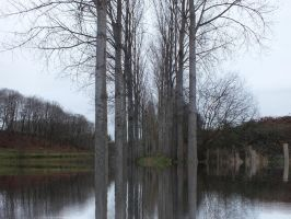 Trees in Water by albutross