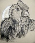 Andean Condor 2 by HouseofChabrier