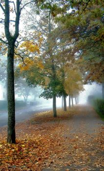yearning for fall .. by KariLiimatainen
