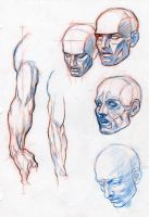 ANATOMY FOR COMICS by AbdonJRomero