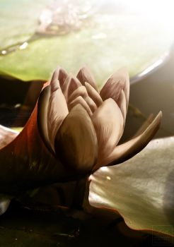 Water lily by Grecian888