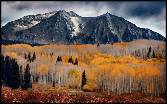 Kebler Pass in the Fall by kimjew