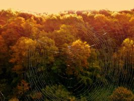 spider web by deveciufuk