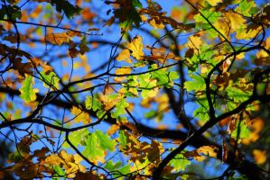 Fall Leaves1 by ajithrajeswari