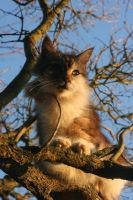 Cat on cherrytree II by GrinseRabe