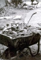Wheelbarrow Full of Green by croovman