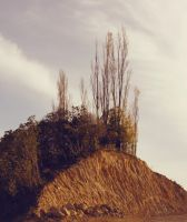 Cliff and trees stock by CathleenTarawhiti