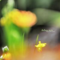 Nature Abstract by HelenaMim