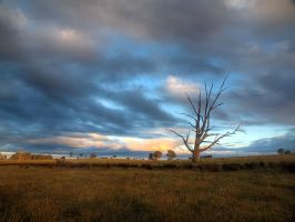 There Was A Crooked Tree by FireflyPhotosAust