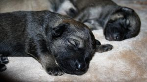 Dog Tired by Photolover68