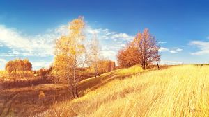 golden autumn by Merkulov