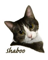 Shaboo Portrait by TheUnseelie