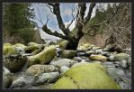 river tree by depleted