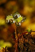 Droplet 56 by josgoh