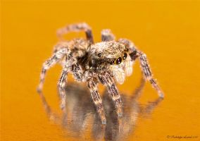 jumping spider 8 extended by Prototyps