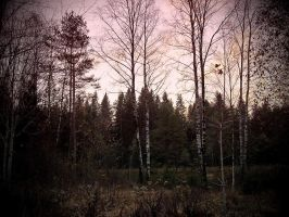 Swedish Autumn Evening by hannayoung