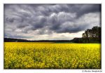 Waiting for rain I by Haufschild