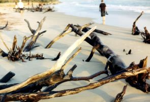 Driftwood 2 by Armenius
