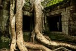 The Temple of Ta Prohm by dogansoysal